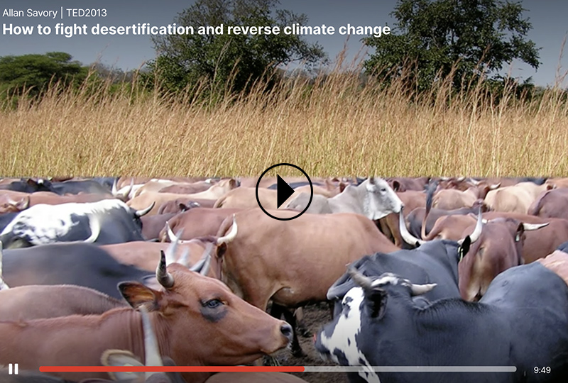 How to fight desertification and reverse climate change.